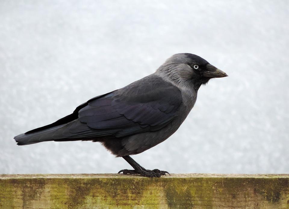 bird-445290_960_720