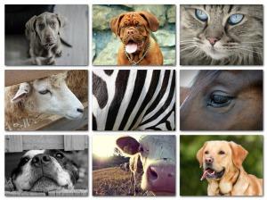 Dieren collage