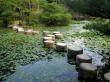 japanese-garden-1159550_960_720
